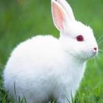 aplastische anemie konijnen atg