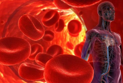 erytrocyten aplastische anemie rode bloedcellen